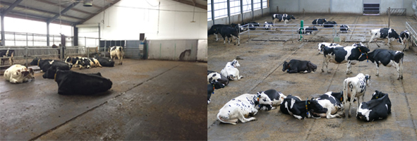 High Welfare Floor gedrag